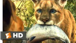 A Dog's Way Home (2018) – Big Kitten Scene (2/10) | Movieclips