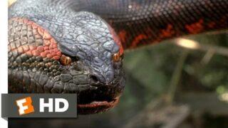Anaconda (8/8) Movie CLIP – Swallowed Whole (1997) HD
